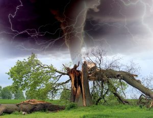 tornado, storm, tree branch